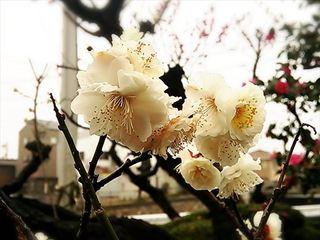 2014-03-03 00.08.33_R.jpg