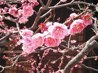 2014-03-14 12.36.49_R.jpg