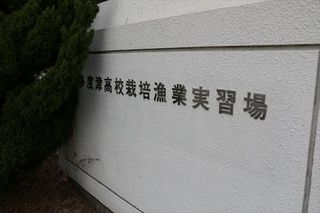 IMG_3441_R.JPG